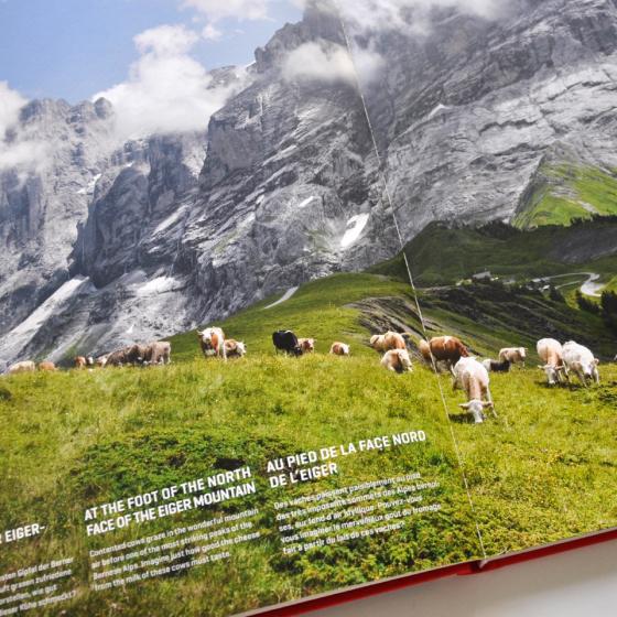Benteli / Meine Schweizer Kühe